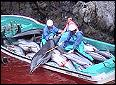 Stop the Taiji Dolphin Slaughter!